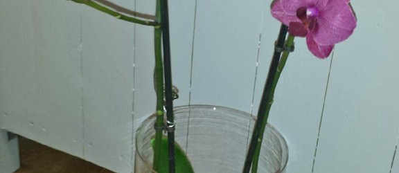 Orkidé i vas…